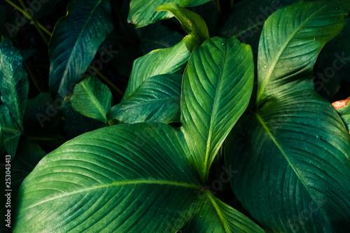 Fototapety, obrazy: Blätter im Close-Up