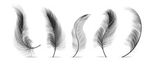 Black Feathers Set Vector. Fea...