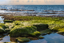View Of The Beach At Low Tide. Stones Covered With Green Wet Seaweed With Puddles Of Water Between