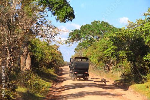 Stickers pour porte Pierre, Sable Car safari in Yala National Park, Sri Lanka