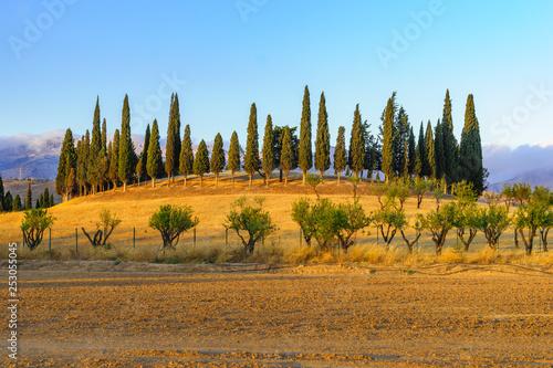 Poster Olive Dolmen del Romeral. Antequera, Malaga. UNESCO Heritage