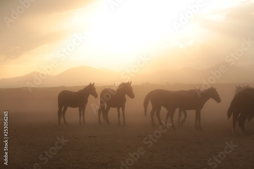 Spoed Foto op Canvas wild horses and cowboys.kayseri turkey