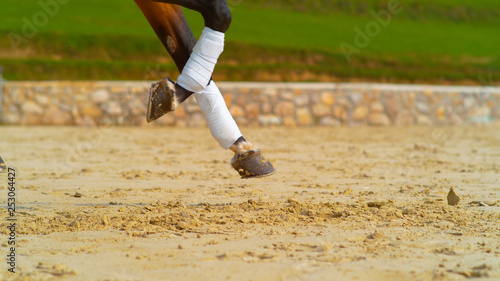 Fotografía  CLOSE UP: Cool shot of brown horses bandaged legs as it canters past the camera
