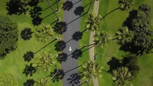 Drone Flies Backward Over Palm Tree Lined Streets Cam Straight Down On Sunny Day