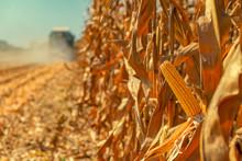 Combine Harvester Is Harvestin...