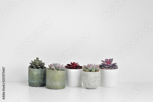Keuken foto achterwand Cactus Green plants, succulents, in cement concrete pots stand in a row on a white background. The concept of a flower shop, gifts for women and the protection of nature.