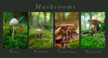 Closeup Of Mushrooms In The Forest - Collage With Text