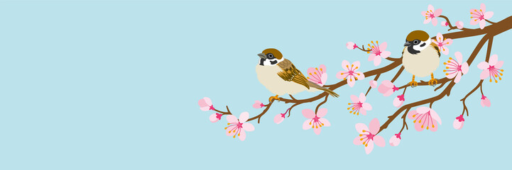 Naklejka Do salonu Two small birds perch on cherry blossom branch -House Sparrow, Header ratio