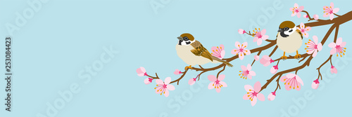 Two small birds perch on cherry blossom branch -House Sparrow, Header ratio Fototapete