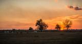 Fototapeta Sawanna - Beautiful and dramatic sunset on the plain
