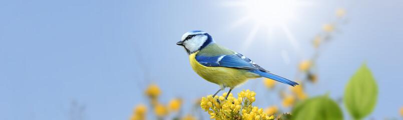 Vögel 98