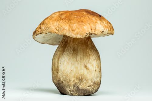 Fotografie, Obraz  White mushroom lat. Boletus edulis isolated on white background