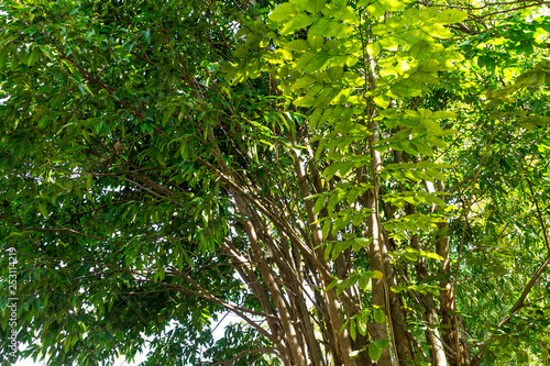 Fotobehang Bamboo Background of nature