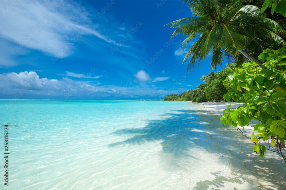Fototapety, obrazy:  Maldives island with white sandy beach and sea