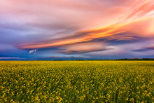 Amazing Colorful Clouds Over The Field With Yellow Rape