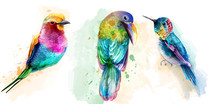 Colorful Tropic Birds Watercolor Vector. Beautiful Parrots, Humming Bird Exotic Set Collections