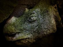 Moldering Rhinoceros Head Taxidermy