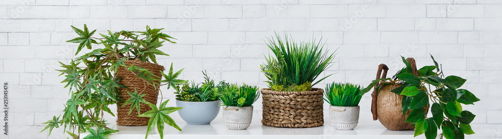 Fototapeta Collection of houseplants in pots over white wall