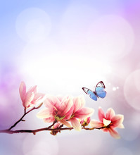 View Of Beautiful Magnolia And Butterfly With Pink Sky Background. Spring And Summer Concept.