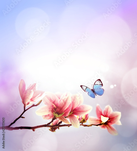 Fototapeta  View of beautiful magnolia and butterfly with pink sky background