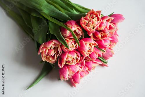 Wiosenne kwiaty. Różowe tulipany na białym tle