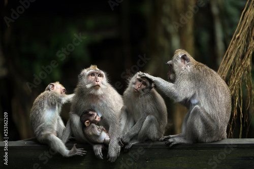Monkeys family in Ubud forest.