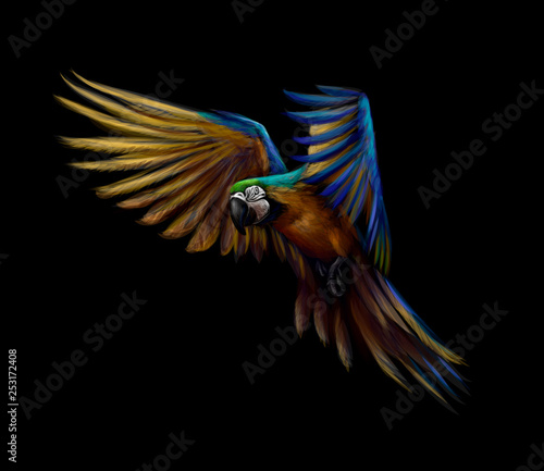 Fényképezés Portrait blue-and-yellow macaw in flight on a black background