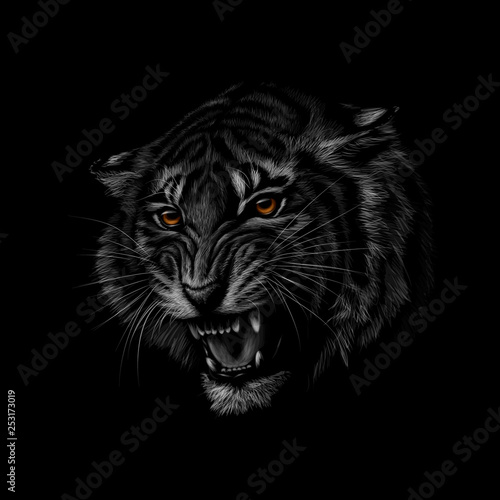 Photo Stands Hand drawn Sketch of animals Portrait of a tiger head on a black background