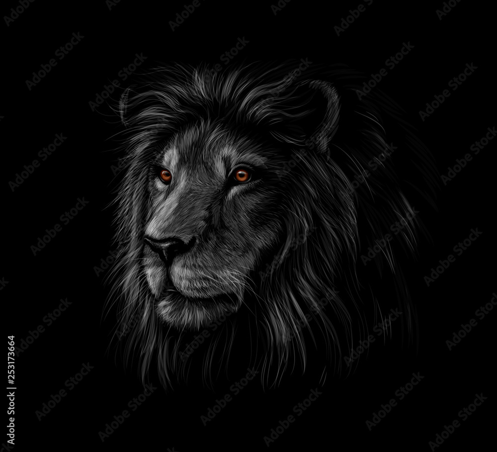 Fototapeta Portrait of a lion head on a black background