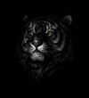 Portrait of a tiger head on a black background