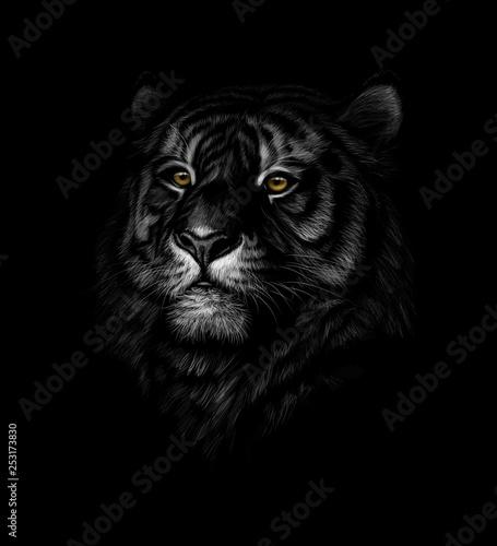 Cadres-photo bureau Croquis dessinés à la main des animaux Portrait of a tiger head on a black background