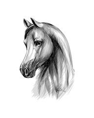 Horse head portrait on a white background. Hand drawn sketch