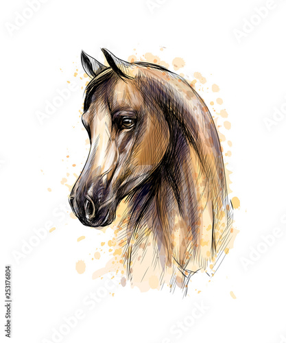 Photo  Horse head portrait from splash of watercolors. Hand drawn sketch