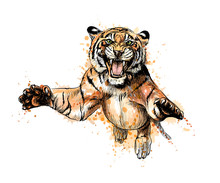 Portrait Of A Tiger Jumping From A Splash Of Watercolor