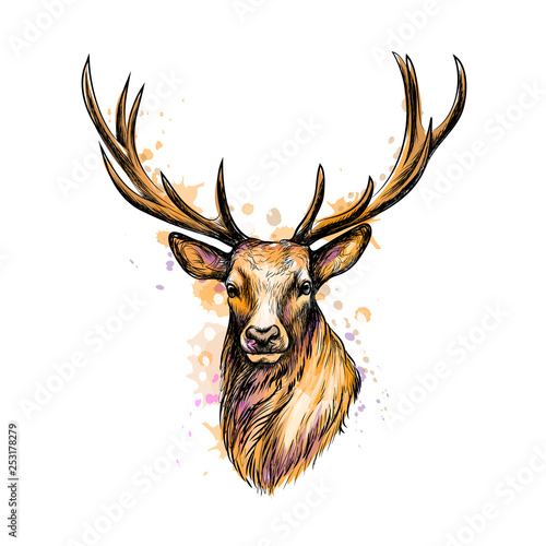Photo  Portrait of a deer head from a splash of watercolor