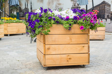 Large Wooden Pot With Flower In Outdoor. Large Wooden Pot With Flowers