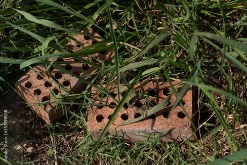 Fotografie, Obraz  Ladrillos en el pasto