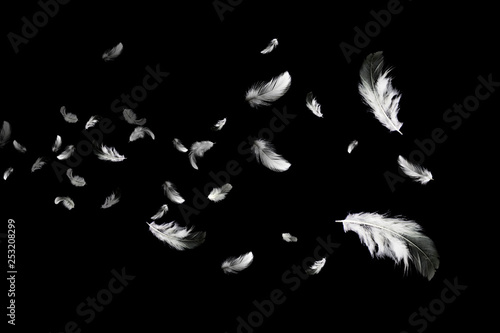 Abstract background. white feathers floating in the dark. Fototapete