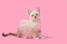 Adorable Tan Brown Tabby Kitte...