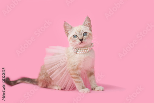 Canvas-taulu Adorable tan brown tabby kitten with pink background