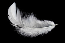 Single White Feather Isolated ...