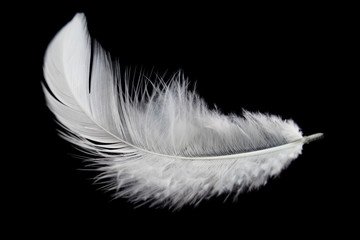 Single white feather isolated on black background