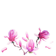 magnolia branch, beautiful pink  flowers, flowers isolated on a white background, vintage