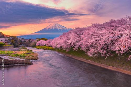 Halny Fuji w czereśniowego okwitnięcia sezonie podczas zmierzchu.