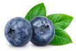 Leinwandbild Motiv Blueberry isolated Clipping Path