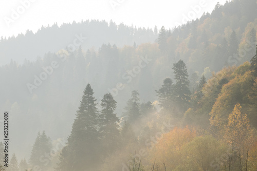 Poster Morning with fog first rays of the sun. Dawn in the mountains. Autumn landscape, yellow trees. Defoliation.