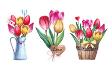 Watercolor Bouquet Of Tulips I...