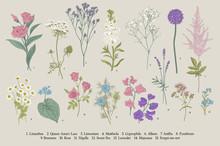 Set Summer Flowers. Classical Botanical Illustration. Wild And Garden Flowers