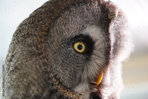 Foto auf Gartenposter Eule Owl uil head hoofd close up closeup