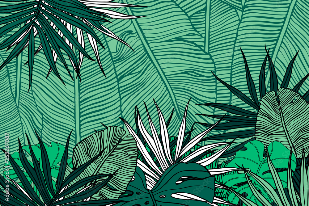 Fototapety, obrazy: Tropical background. Texture with banana leaves, palm and  monstera.